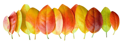Catalog Autumn Leaves Png Transparent Images PNG Images
