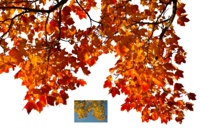 Leaves On Pngheaven Pictures PNG Images