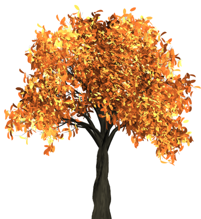 Maple Tree Png PNG Images
