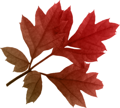 Red Autumn Leaves Png Image