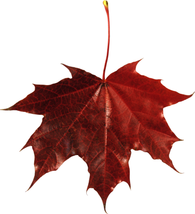Red Leaves, Autumn, Spring, Winter, Seasons, Leaf, Png PNG Images