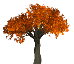 Tree Png Images PNG Images