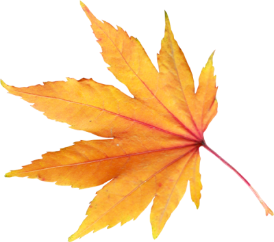 Yellow Leaves, Autumn, Spring, Winter, Seasons, Leaf, Png PNG Images