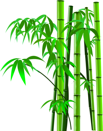 Transparent Image Bamboo, Grain, Plant Species, Tree Varieties