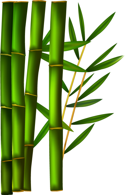 Photo Of  Reed In Form Green Rooted Bamboo PNG, Basic, Tree Species, Plant Species