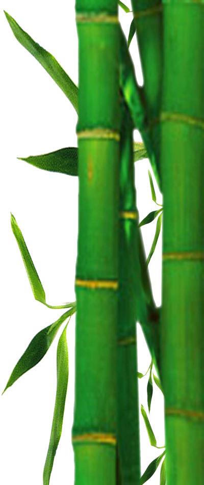 Green Cane Bamboo PNG, Grass, Forest, Soil