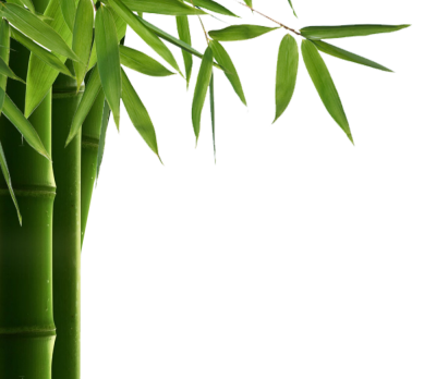 Transparent Thin Leaved Bamboo Painting HD, Durable, Bamboo, Sunlight, Fertilizer, Growing Trees PNG Images