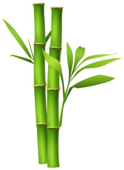 Green Leaved Bamboo Plants Clipart PNG Images
