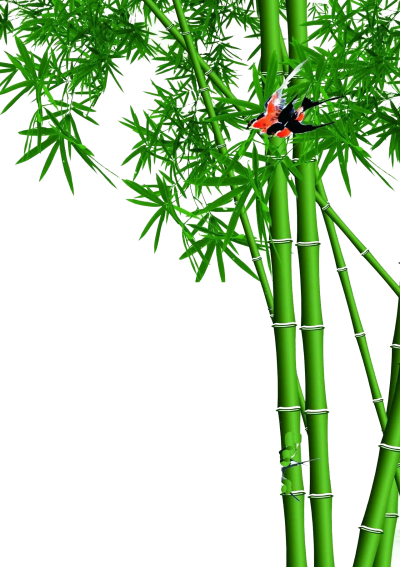 PNG Green Red With A Butterfly On Bamboo Plants, Home Decor, Use Of Bamboo PNG Images