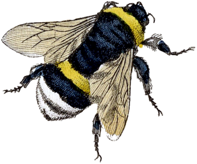 Sting, Organism, Honey Bee Png Clipart Free Download Drawing PNG Images