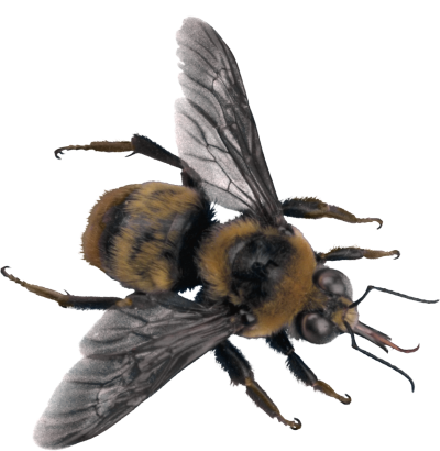 Dark Black Bee Clipart images Download PNG Images