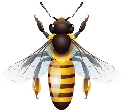 Digital Golden Honey Bee Png Clipart Hd Background PNG Images