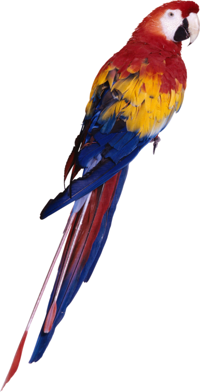 Parrot Bird Transparent Background
