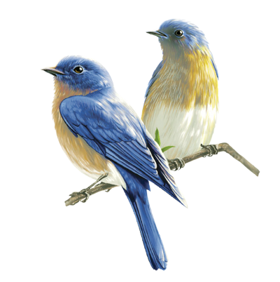 Double Birds HD Download, Branch, Glance, Migration PNG Images
