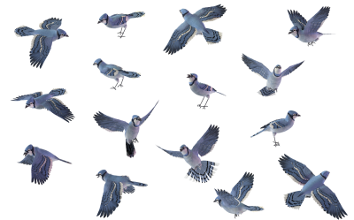 Regular Flying Birds HD Download, Swallows, Paradise, Parrots, Albatross PNG Images