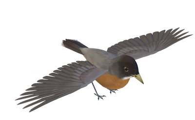 PNG Gray Winged Bird, Species, Beak, Wing PNG Images
