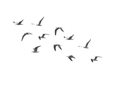 Brown Birds illustration Photos, Fly, Freedom, Sky, Clouds PNG Images