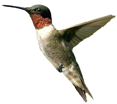 Flying Hummingbird image Transparent, Breeding, Egg, Vertebrate, Flight PNG Images