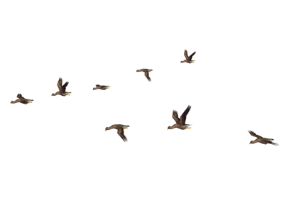 Left Flying Birds HD, Forest, Nature, Flight PNG Images