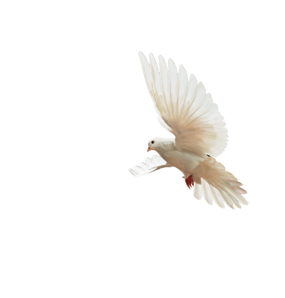 PNG Flying White Dove Bird, Noble, Flight, White, Variety PNG Images