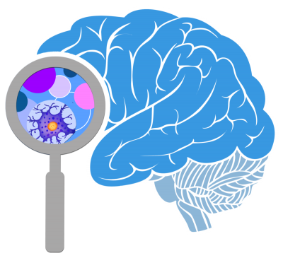 Brain High Quality PNG PNG Images