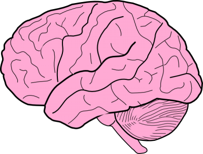 Brain Vector PNG Images