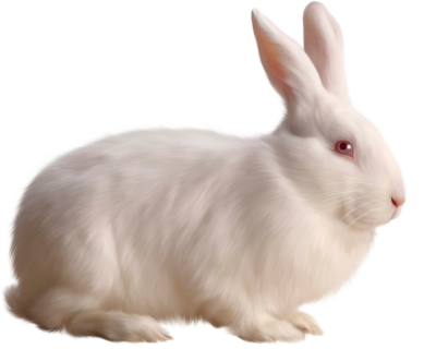 All White Bunny Side View Hd Png PNG Images