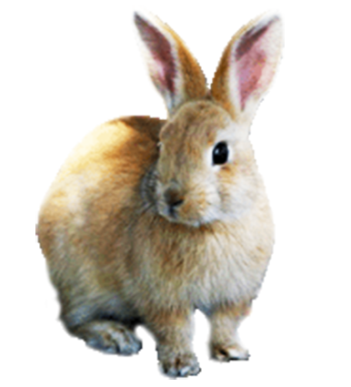 Animal, Carrot, Cute Funny Png Clipart PNG Images
