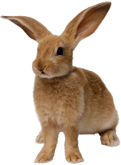Brown Bunny Hd Png PNG Images