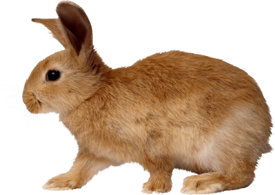 Brown Bunny Walking From Side Transparent Free PNG Images