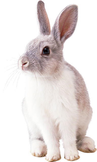 Bunny Animal Nature Png Clipart PNG Images