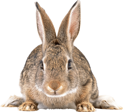 Cute Brown Bunny Transparent Clipart PNG Images