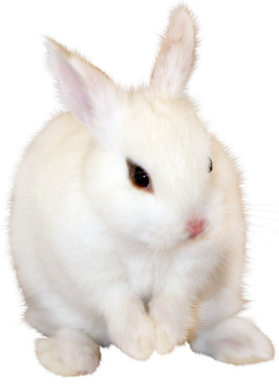 Cute White Bunny Png Free PNG Images
