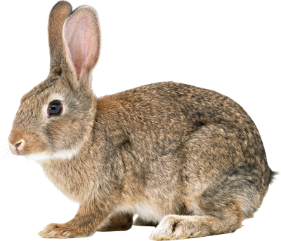 Mother Bunny Hd Transparent PNG Images