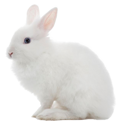 Rabbir, Carrot, Animal, White Bunny Transparent Hd PNG Images