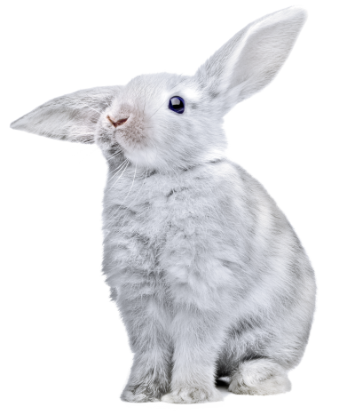 Rabbit, Gray Bunny Png Hd PNG Images