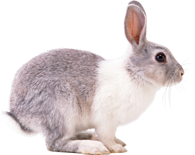 Red Eyed Bunny Transparent Backgorund PNG Images