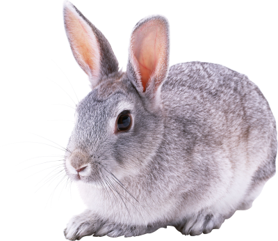 Red Eyed Gray Bunny Background Transparent PNG Images