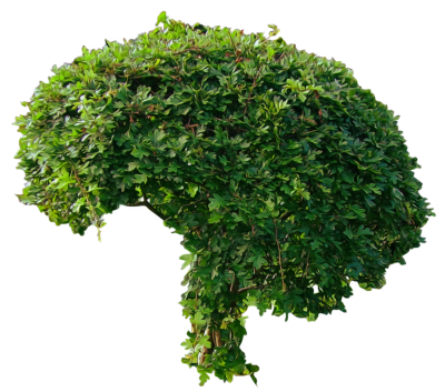 Bushes, Trees Models Hd Png PNG Images
