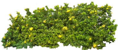 Elegant Yellow Floral Green Bush Transparent Free PNG Images
