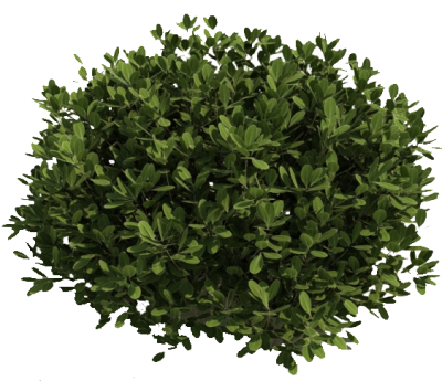 Fresh View Green Bush Png Clipart PNG Images