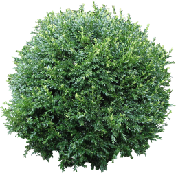 High Quality Flora Circle Bush Clipart Png PNG Images