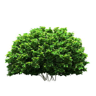Live View Green Bush Hd Png PNG Images