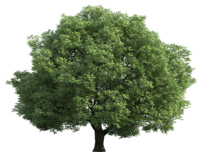 Real Simple Green Tree Transparent Background PNG Images