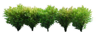 Regularly Maintained Green Bushes Hd Png PNG Images