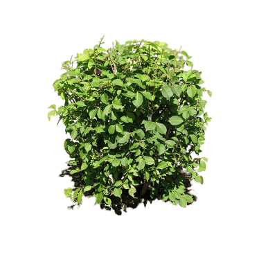 Small Bush Plant image Png Free PNG Images