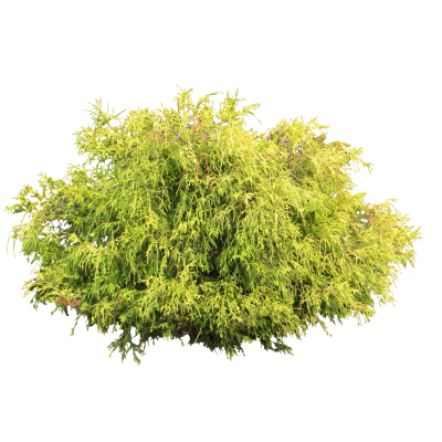 Yellow Green Mix Bush Transparent Background PNG Images
