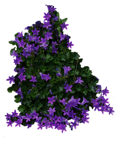 Bushes Free PNG PNG Images