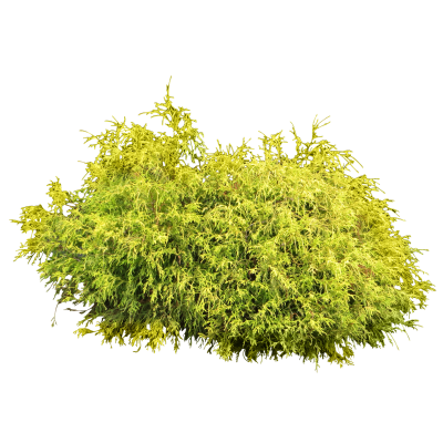Shrub, Bushes Cut Out Png PNG Images