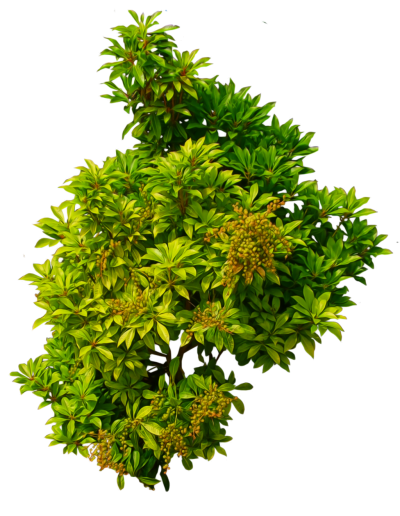 Shrub Bushes Clipart Photo PNG Images